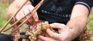 Vendange de l'hivernal @ Crouseilles | Crouseilles | Nouvelle-Aquitaine | France